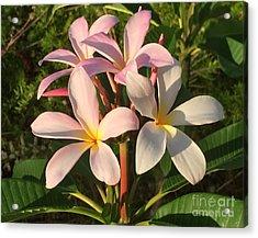 Plumeria Heaven Acrylic Print