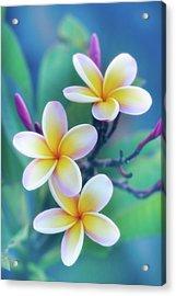 Plumerias In Pastel Acrylic Print