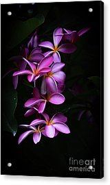 Acrylic Print featuring the photograph Plumeria Light by Kelly Wade