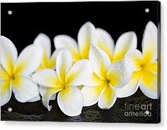 Acrylic Print featuring the photograph Plumeria Obtusa Singapore White by Sharon Mau