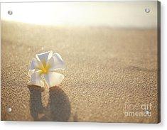 Plumeria On Beach I Acrylic Print by Brandon Tabiolo - Printscapes