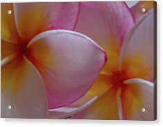 Acrylic Print featuring the photograph Plumeria Pair by Roger Mullenhour