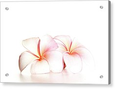 Acrylic Print featuring the photograph Plumeria by Roger Mullenhour