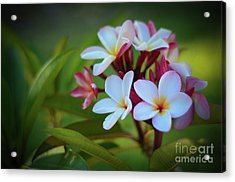 Acrylic Print featuring the photograph Plumeria Sunset by Kelly Wade