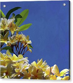 Plumeria_01 Acrylic Print