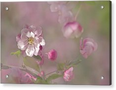Pnk And Green Acrylic Print by Ann Bridges