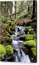 Pnw Forest Acrylic Print