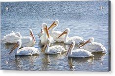 Pod Of Pelicans I Acrylic Print