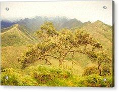 Podocarpus Tree Acrylic Print