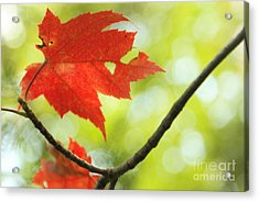 Acrylic Print featuring the photograph Poesie D'automne  by Aimelle