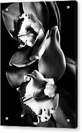 Poets Acrylic Print by Matti Ollikainen