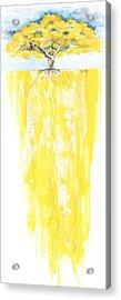 Poinciana Tree Yellow Acrylic Print by Anthony Burks Sr