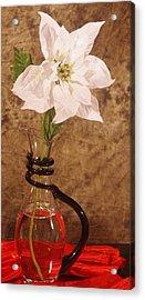 Poinsettia In Pitcher  Acrylic Print