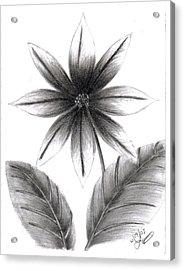 Poinsettia Acrylic Print by Lynnette Jones