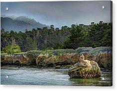 Point Lobos, Calif. Whaler's Cove Acrylic Print