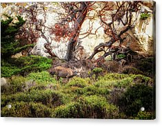 Point Lobos - Eden Acrylic Print