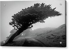 Point Reyes Fog Black And White Acrylic Print