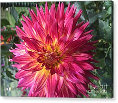 Pointed Dahlia Acrylic Print