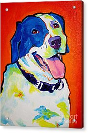 Pointer - Causi Acrylic Print by Alicia VanNoy Call