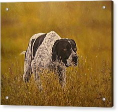 Pointer...to The Point....... Acrylic Print by Erna Goudbeek