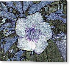 Pointilized Flower Acrylic Print by Merton Allen
