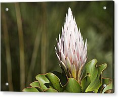 Acrylic Print featuring the photograph Pointing Up by Nathan Rupert