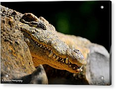 Pointy Teeth Acrylic Print by Barbara Bowen