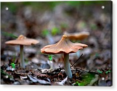 Pointy Top Mushrooms Acrylic Print by Rebecca Stowers