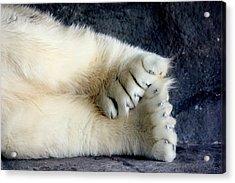 Polar Bear Paws Acrylic Print