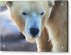 Polar Bear Wooden Texture Acrylic Print by Dan Sproul