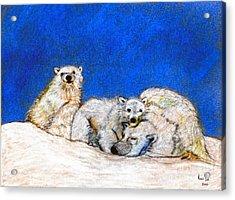 Polar Bears With Love Acrylic Print by Marie Loh