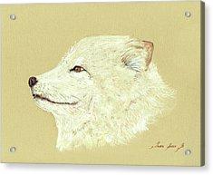 Polar Fox Portrait Acrylic Print by Juan  Bosco