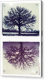 Polaroid Transfer Tree Acrylic Print by Jane Linders
