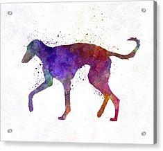 Polish Greyhound In Watercolor Acrylic Print