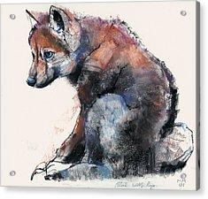 Polish Wolf Pup Acrylic Print