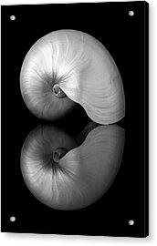 Polished Nautilus Shell And Reflection Acrylic Print by Jim Hughes