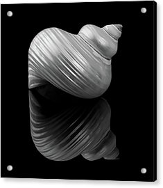 Polished Turban Shell And Reflection Acrylic Print by Jim Hughes