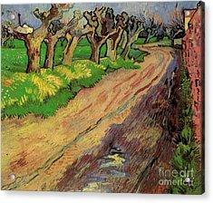 Pollard Willows Acrylic Print