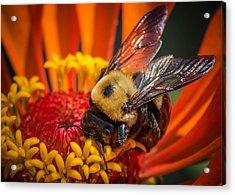 Pollen Plenty Acrylic Print