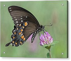 Acrylic Print featuring the photograph Pollinating #1 by Wade Aiken