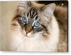 Polly Acrylic Print by Clayton Bruster