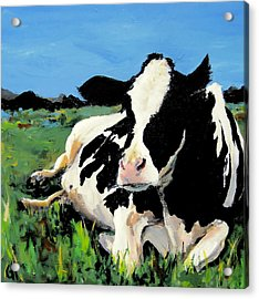 Polly The Cow Acrylic Print by Cari Humphry