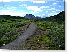 Polychrome Pass Trail, Denali Acrylic Print