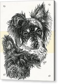 Pomapoo Father And Son Acrylic Print by Barbara Keith