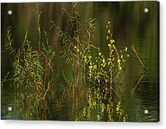 Pond Color Acrylic Print