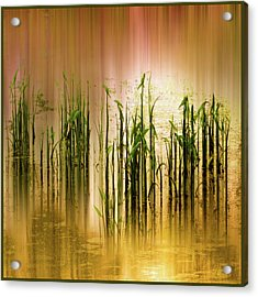 Acrylic Print featuring the photograph Pond Grass Abstract   by Jessica Jenney