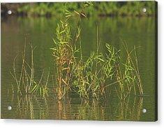 Pond Life Acrylic Print