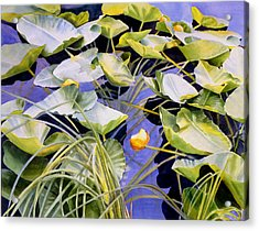 Pond Lilies Acrylic Print by Sharon Freeman