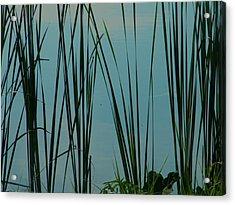 Pond Acrylic Print by Nereida Slesarchik Cedeno Wilcoxon