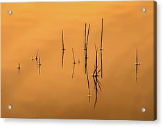 Pond Reeds In Reflected Sunrise Acrylic Print